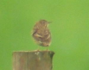 A Tree Pipit at Weeting Heath (11/5/04)
